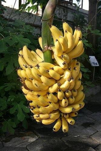 The Mythical Banana Kingdom Of Iceland