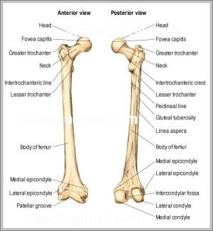 Anatomy   Graph Diagram   Page 36
