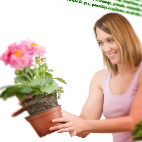 Plant-Shop-2