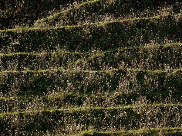 Landscape Patterns