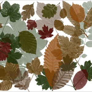 Download Photoshop Brush Wood Leaves