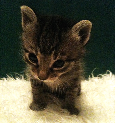 Myrcco the Space Cat - Pet Scrapbook Page