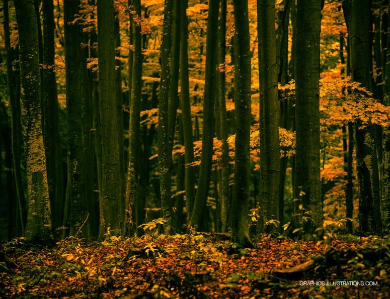 autumn wallpaper 1024x768 graphics-illustrations