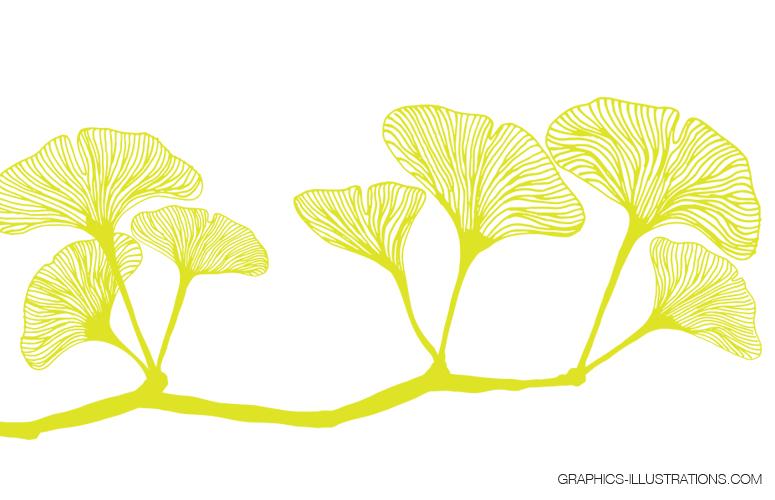 Ginkgo Leaves , Transparent PNG