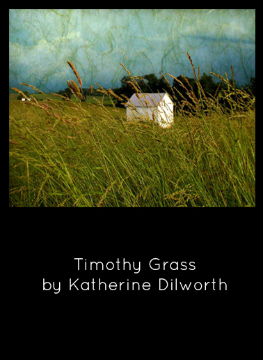 Timothy Grass by Katherine Dilworth - Photo Manipulation