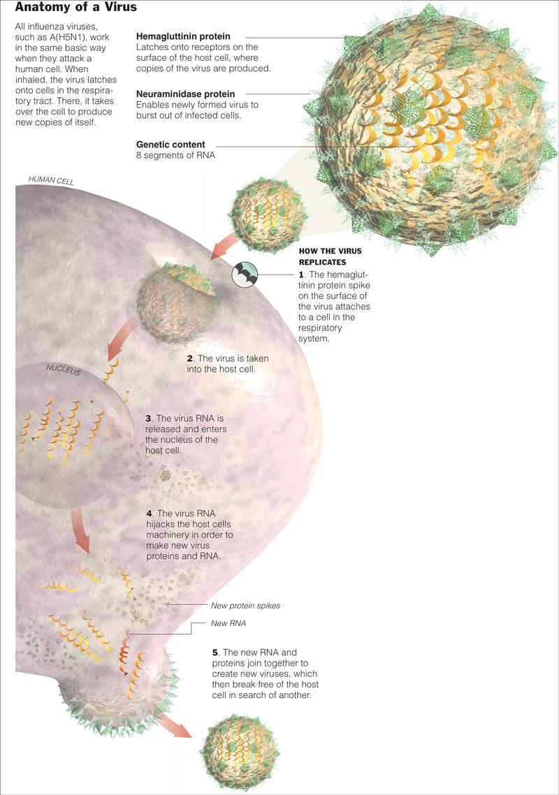 Evolution Making Sense Of Life Zimmer Pdf