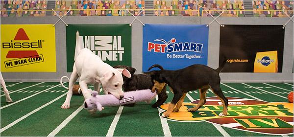 Last Year's Puppy Bowl