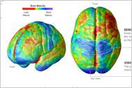 The Child's Developing Brain