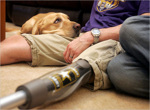 a VetDogs service dog (c) The New York Times