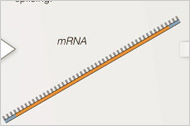 A Bestiary of RNA