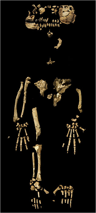 Fossil Skeleton From Africa Predates Lucy