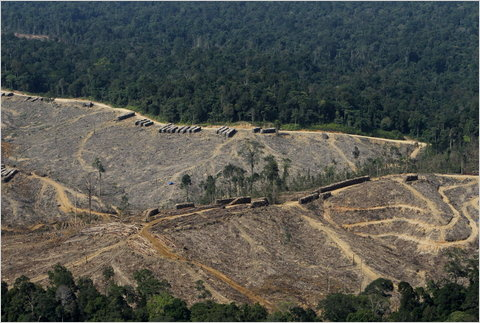 Deforestation on the island of Sumatra in Indonesia.