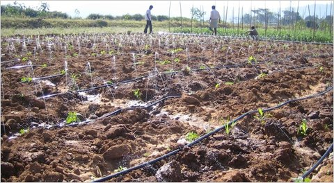 Farmers deploying the Driptech irrigation system in southern India.