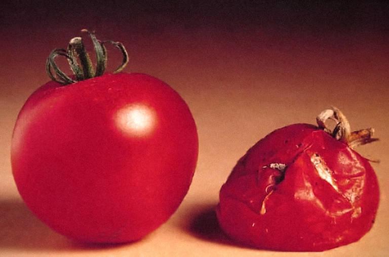 https://i1.wp.com/graphics8.nytimes.com/images/2013/06/24/us/video-retro-report-food/video-retro-report-food-superJumbo.jpg