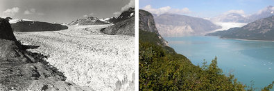 Muir Glacier at Glacier Bay National Park and Preserve in Alaska is among the many worldwide that are disappearing. Muir, left, as seen in August 1941, and photographed in August 2004.