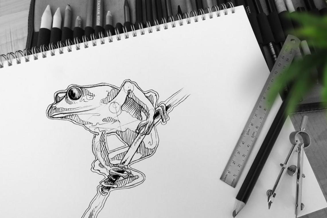 illustration croquis dessin technique phyllomedusa bicolor grenouille amazonie