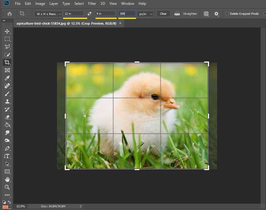 how to change aspect ratio in photoshop