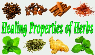 Healing Properties of Herbs - Infographics