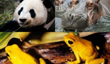 10 Animals You Want To Hug But Should NOT