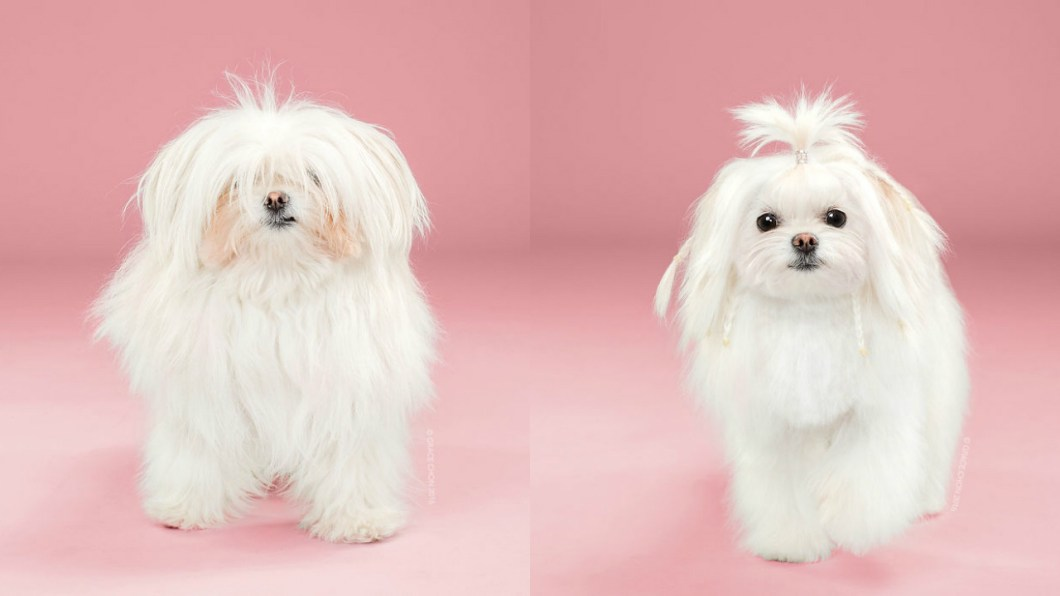 Doggies Before And After Their Haircut_008