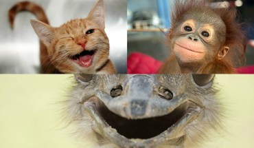 These 30 Animals Are Here To Make Your Day