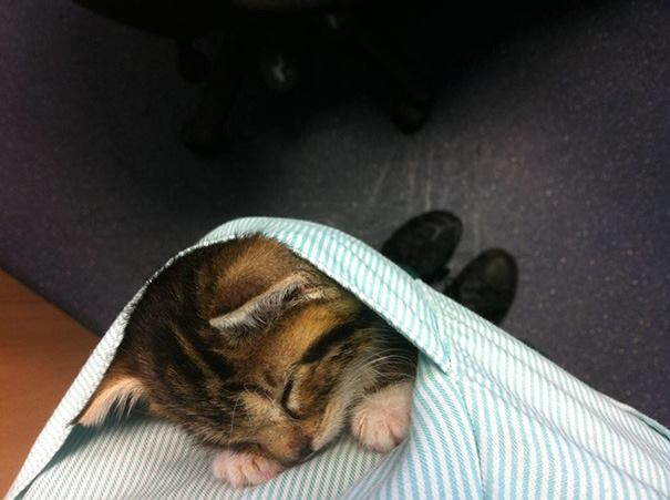 These Pictures Will Make You Want To Work At An Animal Hospital9