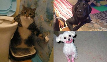 14 Pets That Were Caught In Action