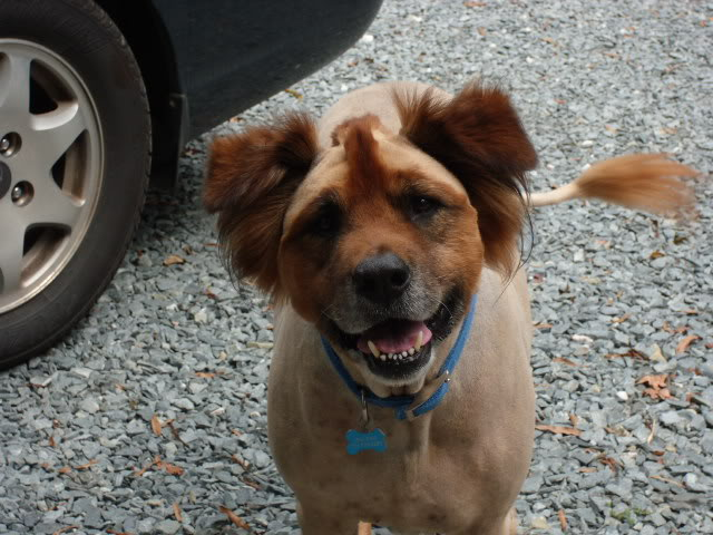 Dogs Who Were Terribly Let Down By Their Groomers (19)
