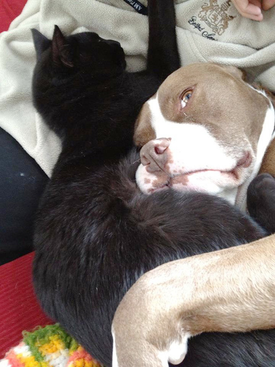 Pictures That Prove Cats And Dogs Are Actually Friends 13