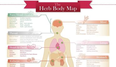 Types Of Herbs And Their Benefits - Infographic