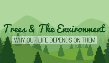 Trees Are Way More Powerful Thank You Think - Infographic