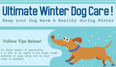 A Guide To Keeping Your Dog Safe During Winters - Infographic