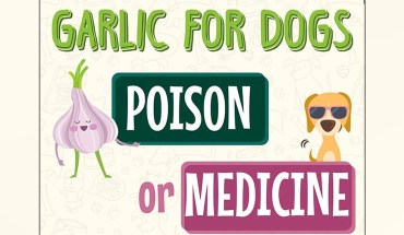 Should Your Dog Be Eating Garlic?  - Infographic