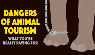 """Animal Tourism Is Anything But """"Fun"""" - Infographic"""