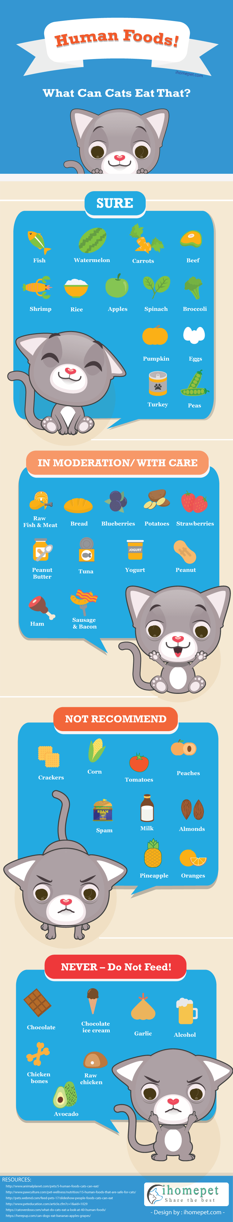 What You Can Feed Your Cat Apart From Cat Food - Infographic
