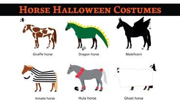 How Horses Celebrate Halloween - Infographic