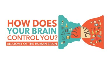 The Ultimate Super Computer: How the Brain Controls the Body - Infographic
