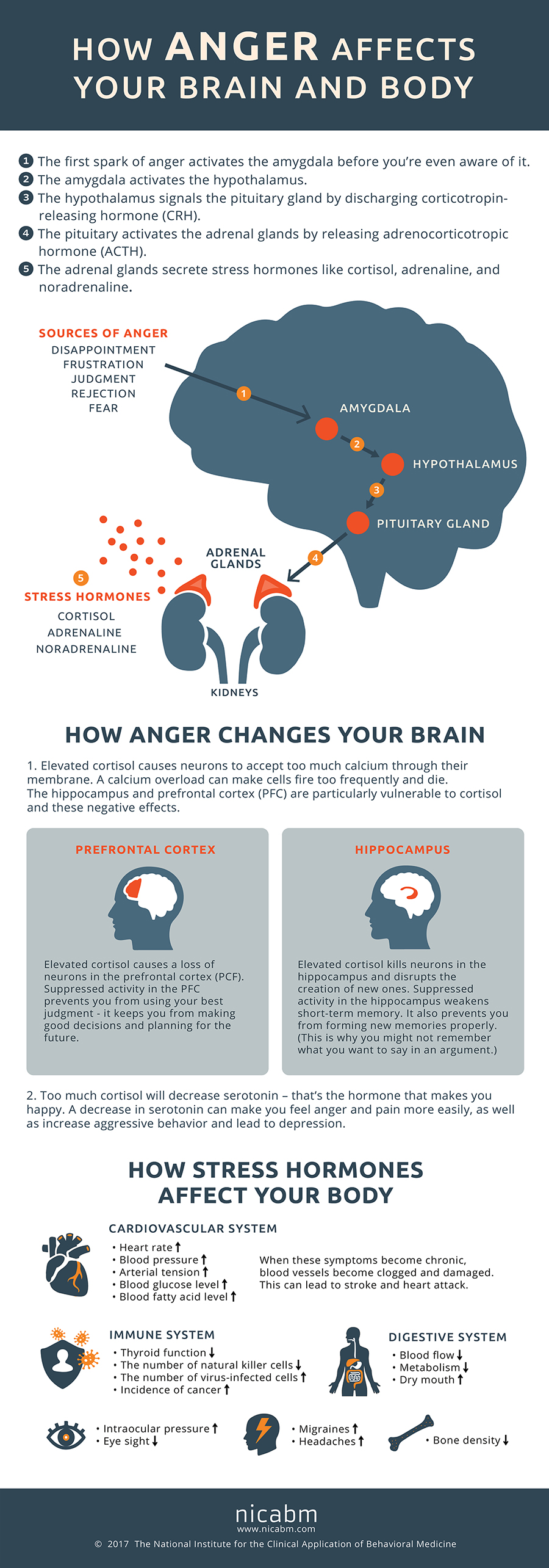 The Damaging Effects of Anger on the Human Body - Infographic