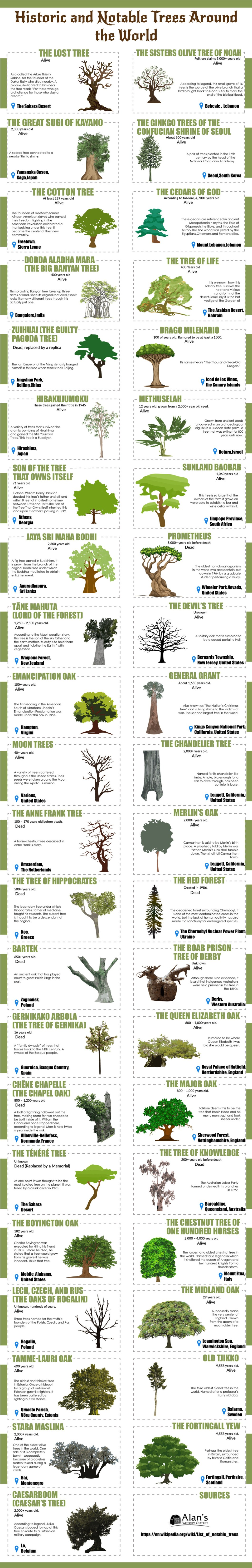 Trees that Witnessed History: Stories of Ancient and Notable Trees Around the World - Infographic