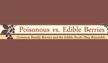 Berries: Edible vs poisonous - Infographic