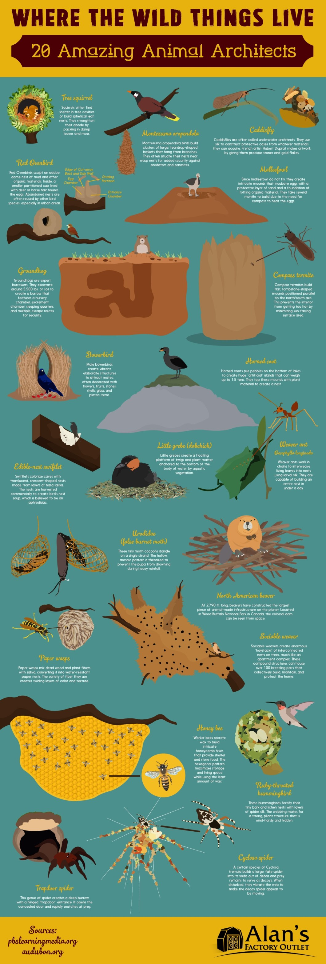 God-Gifted Architecture: 20 Animal Homes that are Marvels of Technology and Design - Infographic