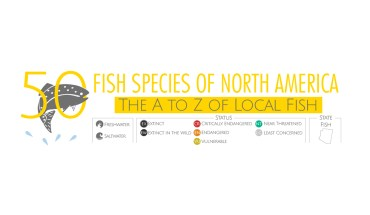Know Your Fish: 50 Species of North America - Infographic