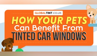 If Your Pet Loves Drives, You Need Car Tints: Here's Why - Infographic