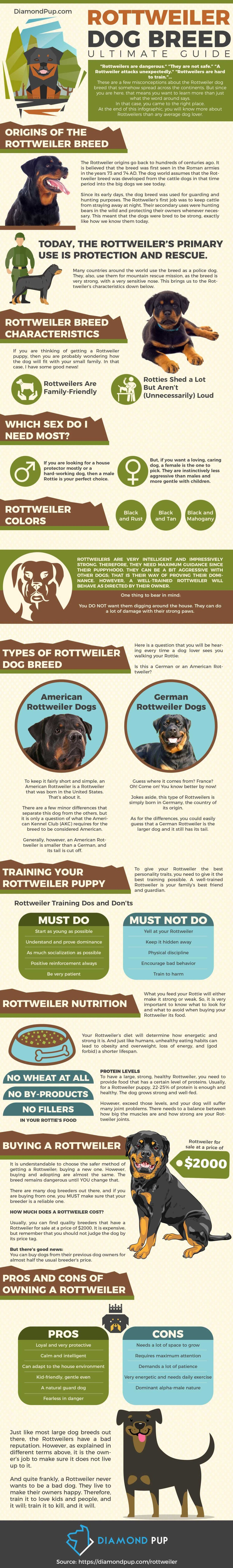 The Dog Lovers Guide on Rottweiler Care - Infographic