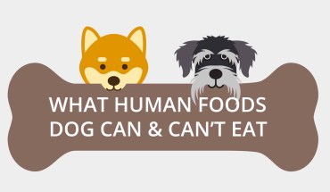 What Human Foods Dog Can & Can't Eat - Infographic