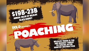 Shocking Statistics On Poaching: Take A Stand Against It - Infographic