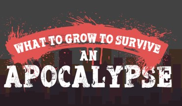 How To Survive Post An Apocalypse?