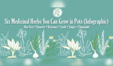 DIY: Grow Your Own Medicinal Herbs