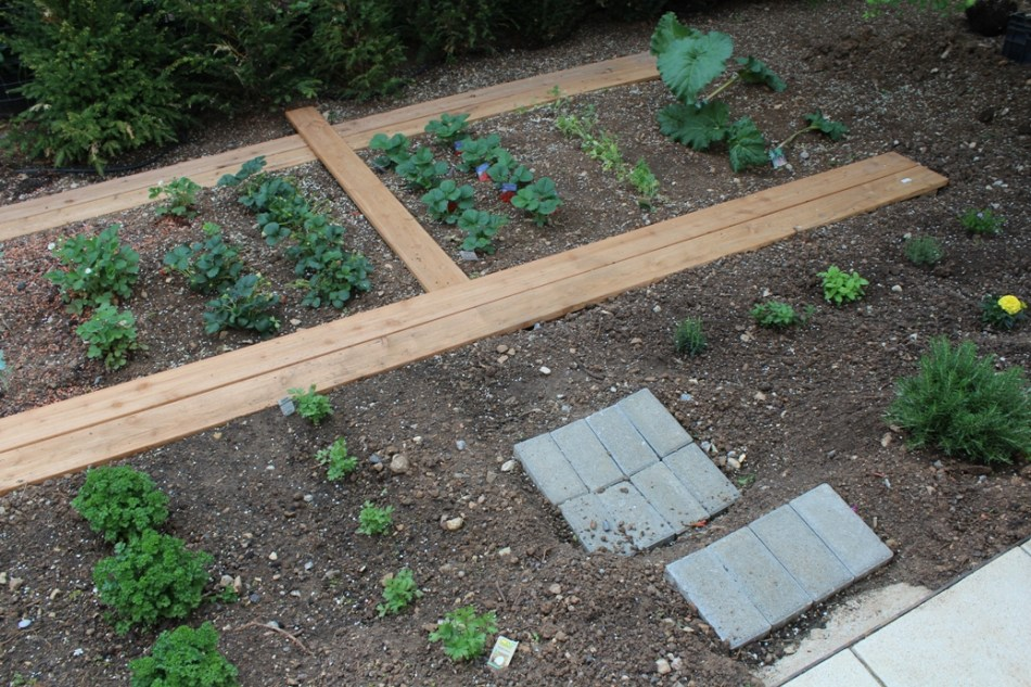 (c) Grashüpfer, Gemüsebeet - Stufen