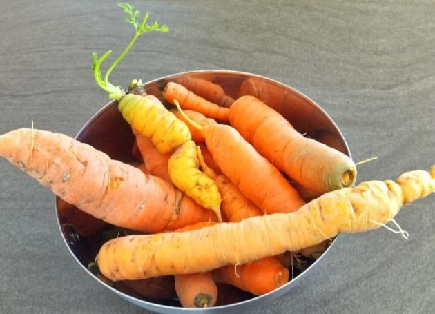 Gemüsebeet Winter: die letzte Ernte - Kartotten